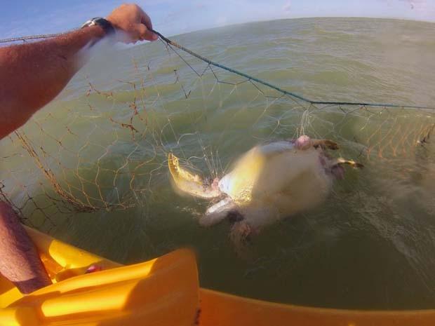 Duas tartarugas são encontradas mortas em rede de pesca na praia do Bessa  (Foto: David Montenegro)