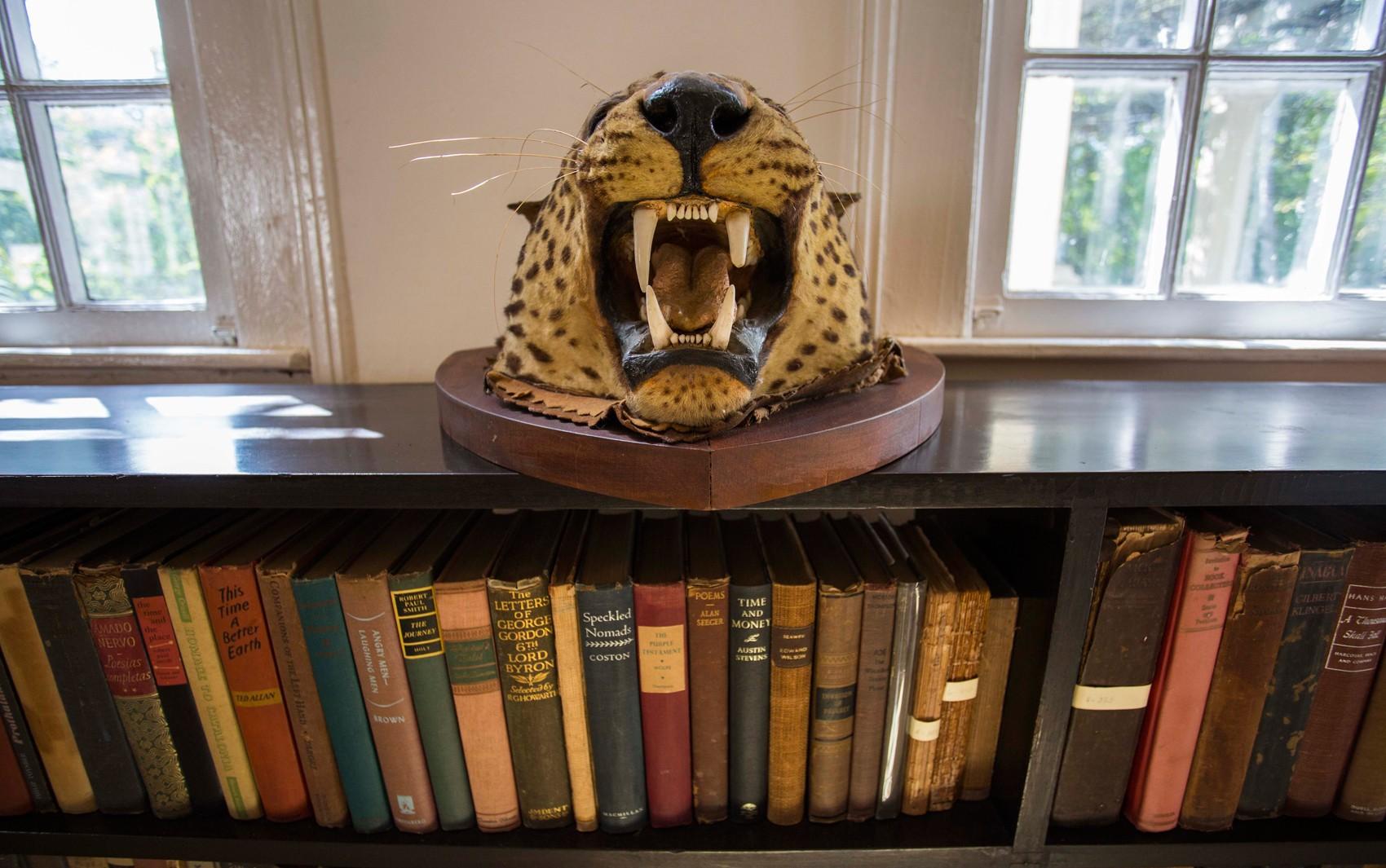 Troféu de caça sobre prateleira de livros em Finca Vigia, casa do escritor americano Ernest Hemingway em Havana, Cuba