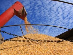 Paraná poderá colher safra de 37 milhões de toneladas de grãos (Foto: Divulgação/Agência de Notícias do Paraná)