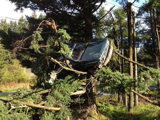 Motorista parou carro em cima de árvore após acidente em Sherwood, no estado do Oregon (Foto: Caters)