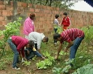 Moradores de Sapucaia cultivam hortas próprias (Foto: Reprodução Bom Dia Rio)