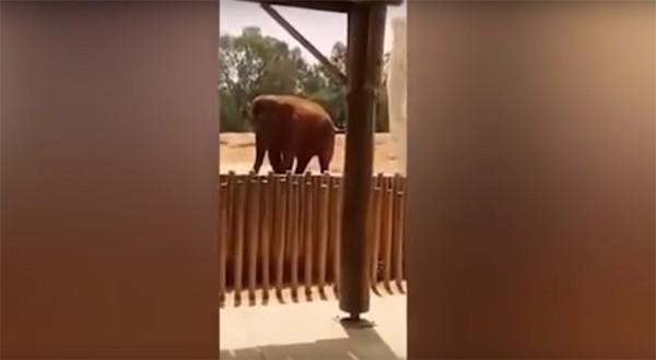Elefante ataca menina de 7 anos com pedrada (Foto: Reprodução /  YouTube)