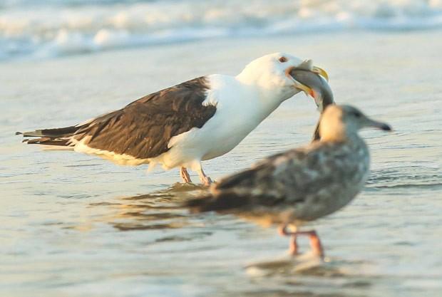 Cena foi registrada em praia de Avalon, no estado de Nova Jérsei  (Foto: Reprodução/Facebook/Seven Mile Times)