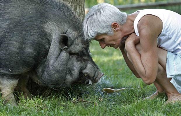 'Marcel' nasceu do cruzamento entre uma porca e um javali. (Foto: Vincent Kessler/Reuters)