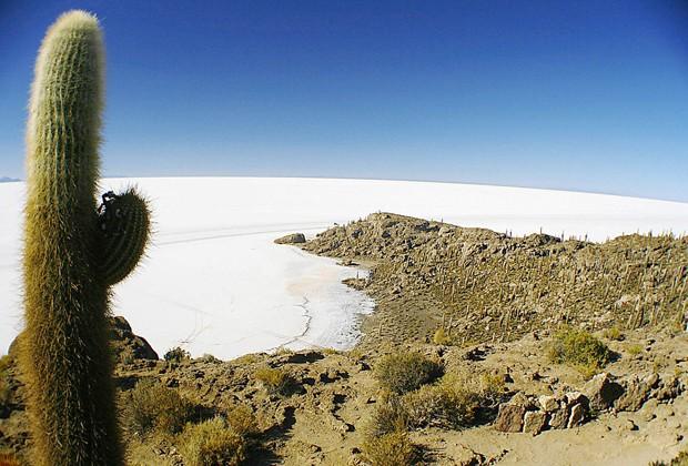 Cactos na Isla del Pescado, que oferece uma boa vista do Salar de Uyuni (Foto: Creative Commons/Valdiney Pimenta)