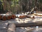 Desmatamento em reserva indígena  leva nove à prisão no Pará