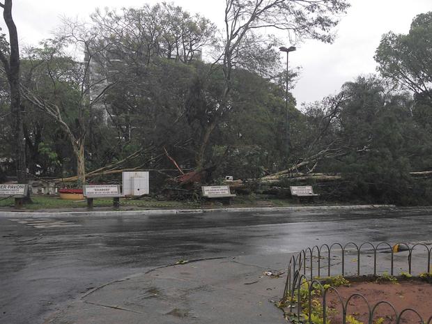 Segundo os bombeiros, cerca de 50 árvores foram derrubadas na cidade  (Foto: José Paulo dos Santos/TEM VC)