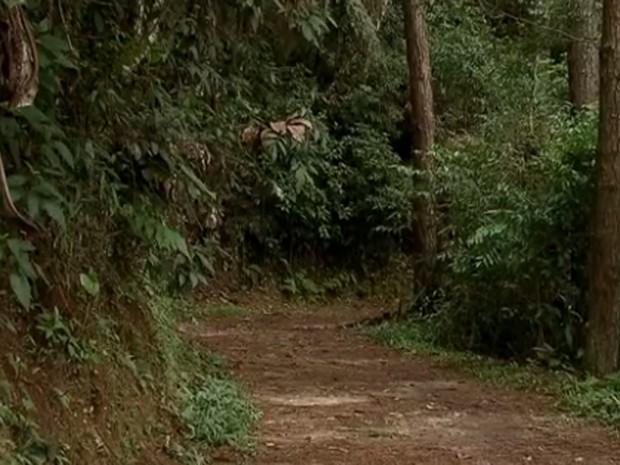 Trilha no Parque Estadual da Cantareira  (Foto: Reprodução/ TV Globo)