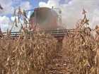 Má distribuição da chuva em Mato Grosso prejudica as lavouras de soja