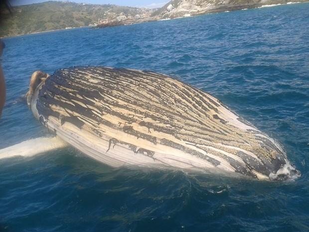 Baleia tem de 8 a 10 metros de comprimento e apareceu morta.  (Foto: Raimundo Rocha/Guarda marítima)