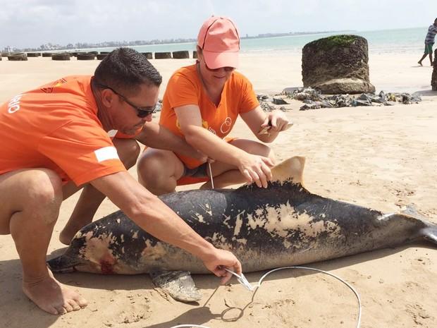 Projeto Guajiru foi até o animal e acionou a Polícia Ambiental (Foto: Walter Paparazzo/G1)