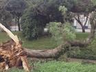 Chuva alaga avenida e derruba árvores em Poços de Caldas, MG