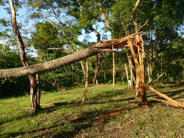 Árvore atingida por raio (Foto: Bruno Dantas)