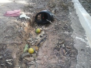 Carga de laranjas ficou espalhada na pista (Foto: Débora Rodrigues/TV Tapajós)