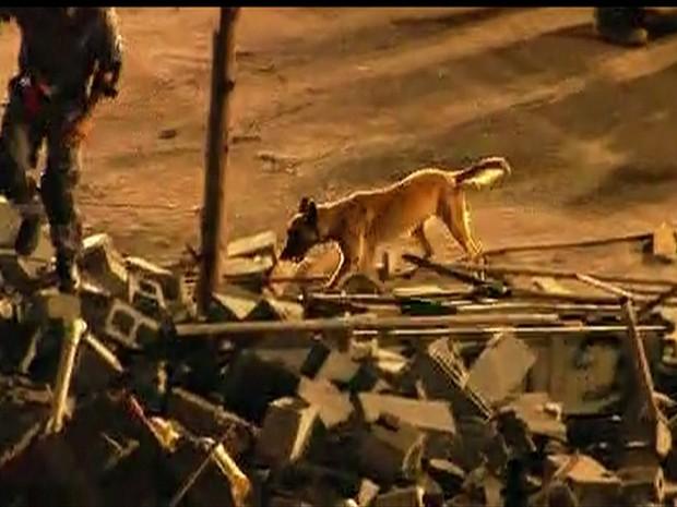 Cães farejadores percorrem escombros de prédio em Guarulhos (Foto: Reprodução/TV Globo)