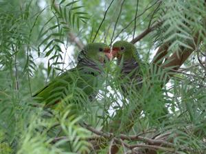 Objetivo é que papagaios se reproduzam e aumentem a população do local (Foto: Espaço Silvestre/Divulgação)