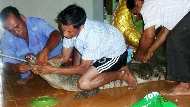 Crocodilo provocou pânico ao invadir templo budista no Vietnã. (Foto: Reprodução)