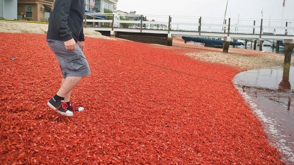 """Praias do Condado de Orange foram """"tingidas"""" de laranja (Foto: Reuters)"""