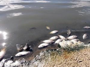 Peixes apareceram mortos nesta quarta-feira (22) (Foto: Roberto Paixão)