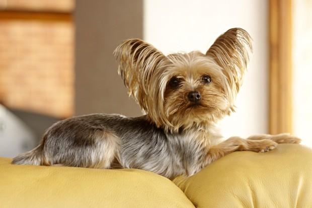Mel, a cachorrinha de estimação de Angélica Ramos (Foto: Celso Tavares/EGO)