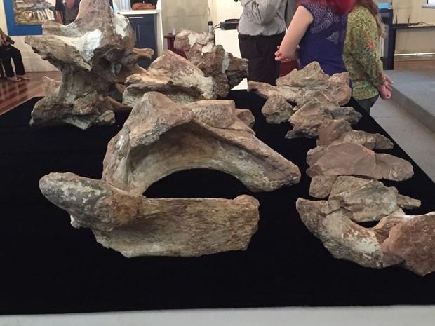 Descoberta do fóssil foi anunciada no Museu de Ciências da Terra, na Urca, Zona Sul do Rio (Foto: Cristina Boeckel / G1)