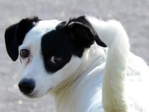 Zoonoses oferece gratuitamente a castração de todo animal adotado (Foto: Zaqueu Proença)