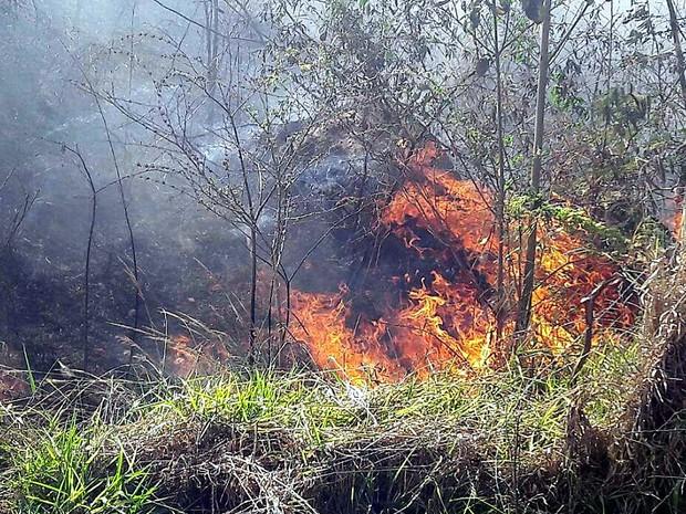Incêndio começou na madrugada e foi controlado na manhã deste domingo (Foto: Nicole Caroline Abreu dos Santos)
