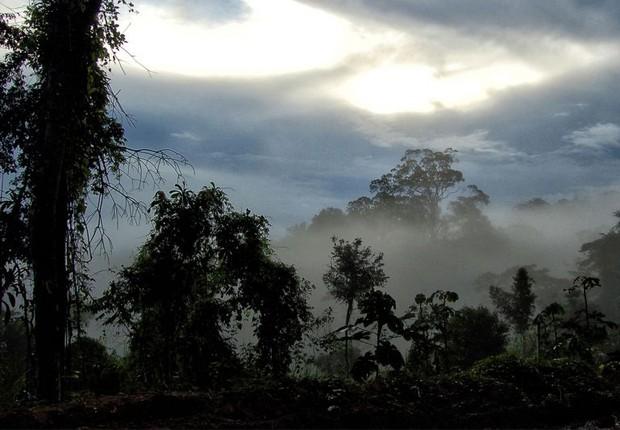 amazônia, floresta, meio ambiente (Foto: Luciana Macedo/Fotos Públicas)