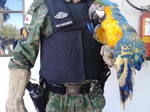 arara capturada uberlândia (Foto: Divulgação/ Polícia Ambiental)