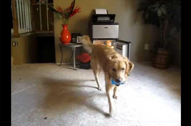 Cena do vídeo que mostra o cachorro trazendo cerveja que foi buscar na geladeira (Foto: Reprodução)