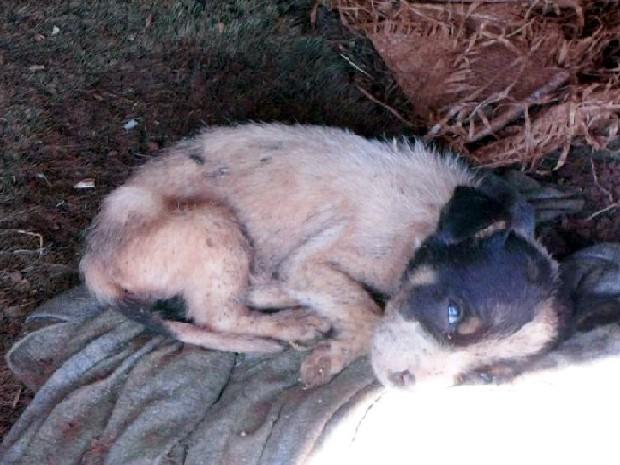 Filhotes foram encontrados com pulgas em Lusitânia (Foto: Polícia Ambiental/Divulgação)