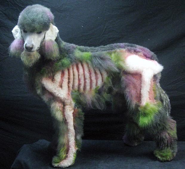 Cadela poodle Xerxes, de cinco anos de idade, foi 'transformada' em um zumbi durante o Halloween (Foto: Amy Brown/NAPCG/AP)