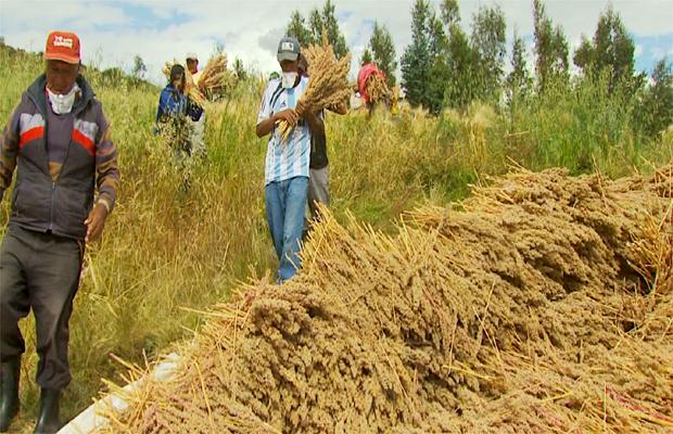 Equipe visita as plantações de quinoa no Peru (Foto: Reprodução EPTV)