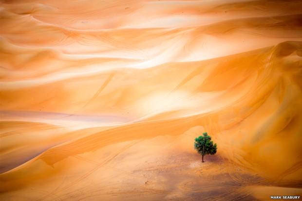 Uma única árvore em meio às dunas do deserto de Dubai, tirada de um balão, ganhou na categoria Paisagens (Foto: Mark Seabury)