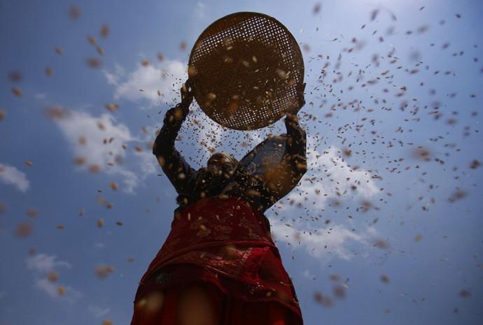 Fazendeiro separa sementes em um campo de Catmandu, no Nepal