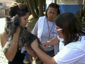 Campanha de Vacinação Contra a Raiva em Campinas (Foto: Reprodução EPTV)