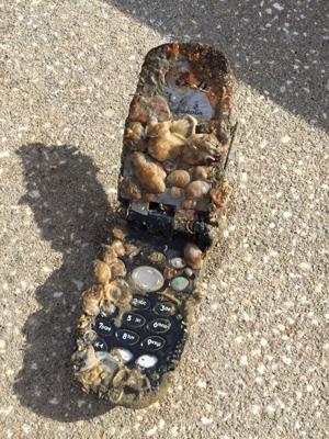 Mergulhadores acham celular coberto de conchas na costa da Flórida (Foto: The Florida Aquarium)