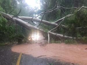 Queda de árvore também causa bloqueio na BR-116 (Foto: Divulgação/PRF)