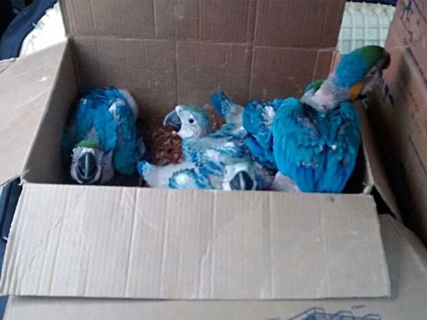 Aves eram mantidas em caixas apertadas e foram resgatadas (Foto: Polícia Federal/Divulgação)