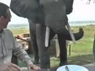Elefante agressivo expulsa turistas de mesa durante jantar no Zimbábue