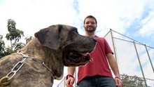 Quadro 'Ao Trabalho'  fala da profissão passeador de cachorros (Divulgação/ TV Gazeta)