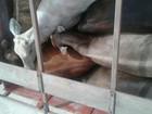 Criminosos invadem fazenda e roubam 11 cabeças de gado em MG