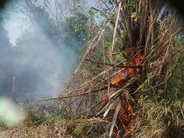 Fogo atingiu vegetação em Itaúnas (Foto: Serli Santos/ TV Gazeta)