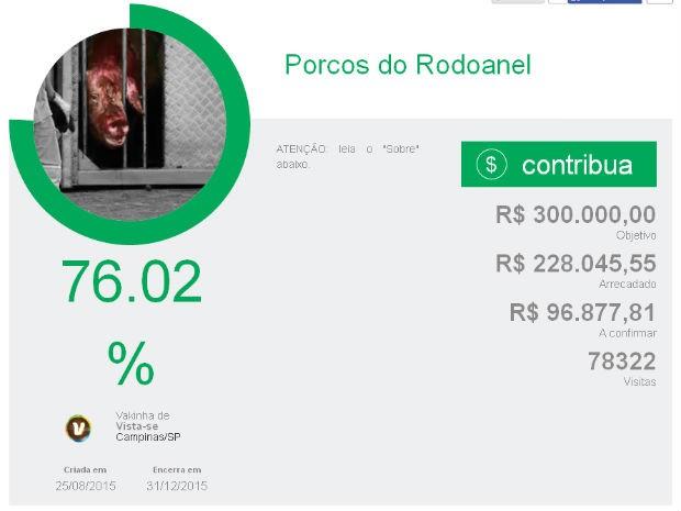 Vaquinha online para porcos do Rodoanel já bateu 76% da meta (Foto: Reprodução)
