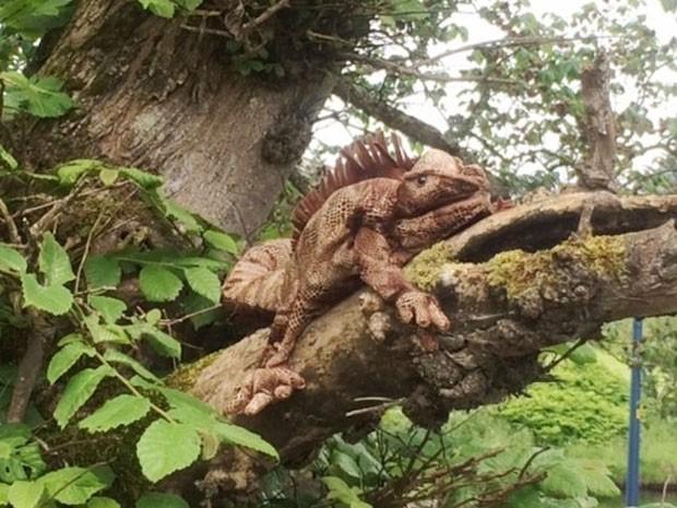 Órgão foi chamado para resgatar iguana, mas descobriu que o animal era bicho de pelúcia (Foto: Scottish SPCA/Divulgação)