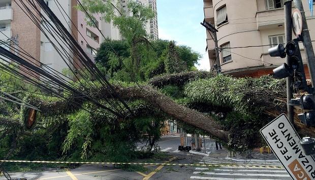 Árvore caída em São Paulo (Foto: Robson Fernandjes / Fotos Públicas)