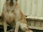 Cão morre após ataque de jacaré que vive em lago de Umuarama, diz dono