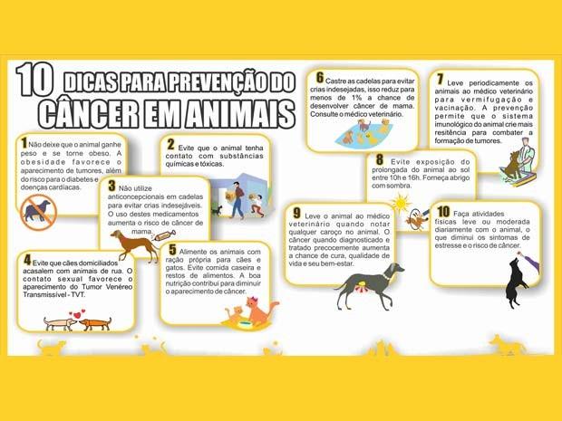 Dicas de prevenção do câncer em animais (Foto: Hospital Veterinário de Uberaba/Divulgação)