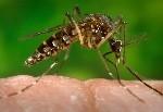 Epidemia de dengue atinge Taubaté. (Foto:  CDC-GATHANY/PHANIE/AFP)