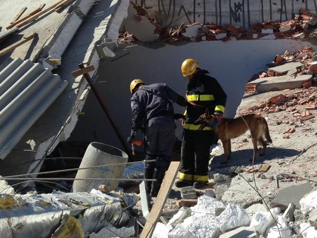 Cachorro farejador busca a décima vítima nos escombros (Foto: Leticia Macedo/G1)